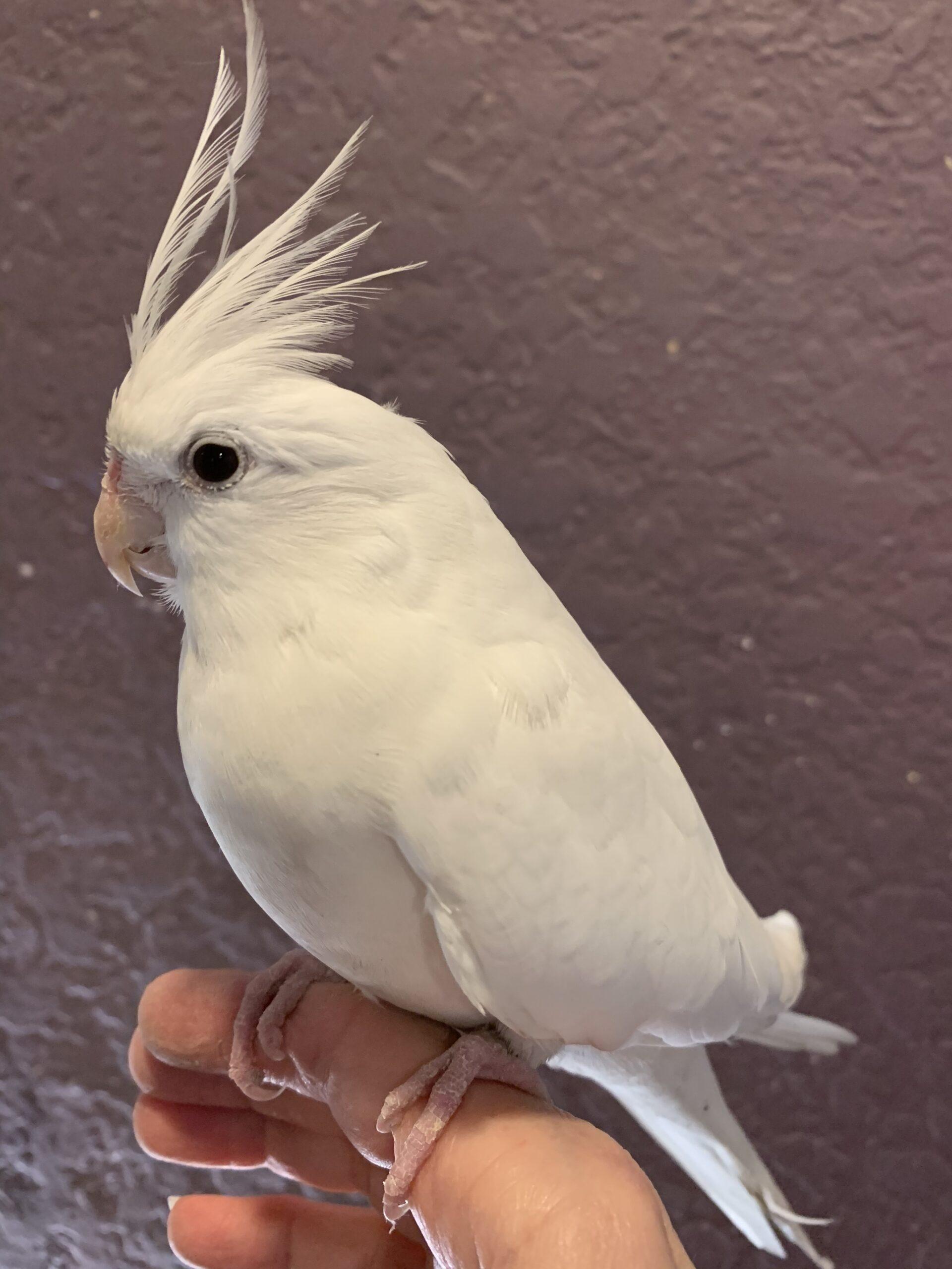 BBBbird,bird, bird…is this a Disney movie?